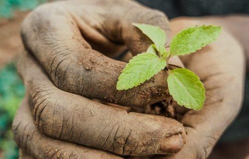 Bilancio sociale 2015: Nutriamo il pianeta