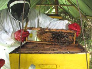 tuta e kit completo per apicoltore da donare in Africa