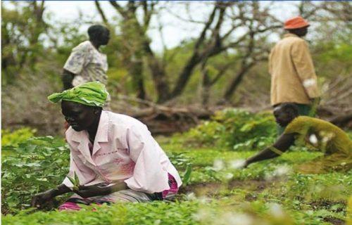 Bilancio sociale 2016: Terra, patrimonio per restare
