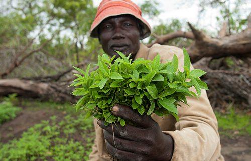 COORDINATORE PROGETTO IN ETIOPIA